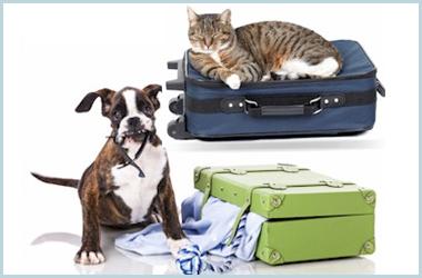 pet boarding dayton oh