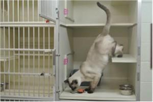 cat-boarding-300x201