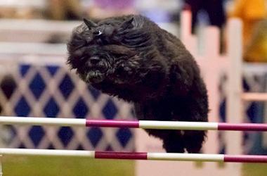Dog Training Agility Dayton OH