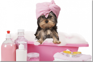 How To Turn Your Pet S Bath Time Into Spa Time Big Times