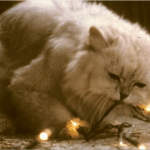 National Lampoon's Christmas Vacation Cat