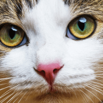 8 Must-Ask Questions Before Boarding Your Cat