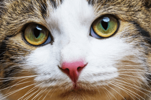 Must-Ask Questions Before Boarding Your Cat