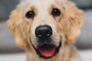 What Your Dog Wants from His Boarding Experience