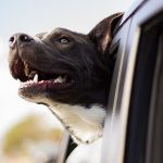Straight from the Doggy's Mouth: A Pet Boarding Daily Diary