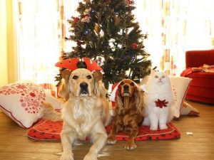 Comfort and Joy for You and Your Pet During the Holidays