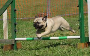 agility training session 2