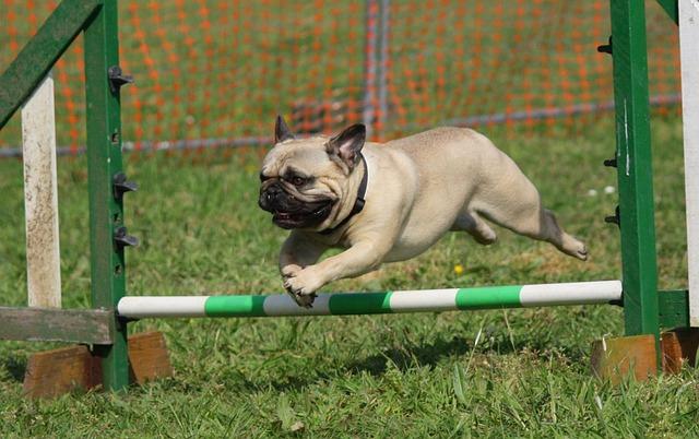 agility training session 4