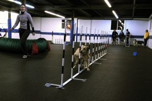 agility session 2