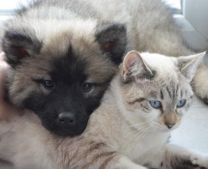 dog and cat snuggle