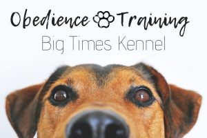 close up of dog - obedience training - big times kennel