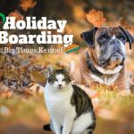 Why Holiday Boarding Is Best for You and Your Pet