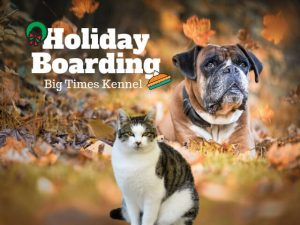 Dog-Cat-Autumn-Leaves-Holiday-Boarding