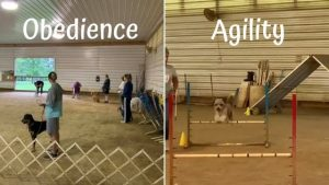 obedience and agility