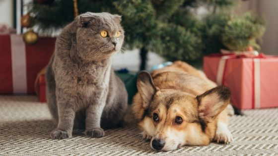 nervous dog and cat during holidays