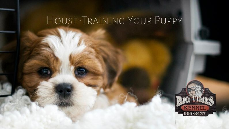 house-training your puppy