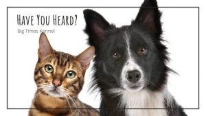 dog training and pet boarding