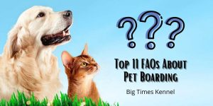 FAQs About Pet Boarding