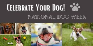 Celebrate Your Dog
