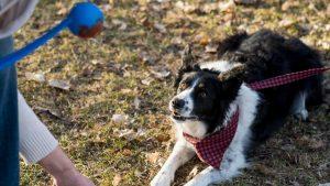 Advanced Manners Dog Training
