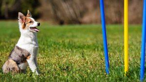 agility training dayton OH