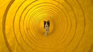 agility dog Dayton OH