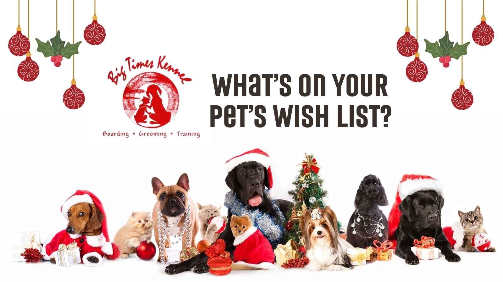 What's on Your Pets Wish List
