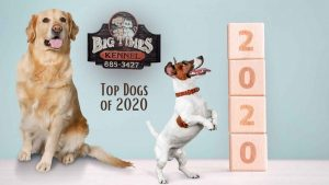 Top Dogs of 2020
